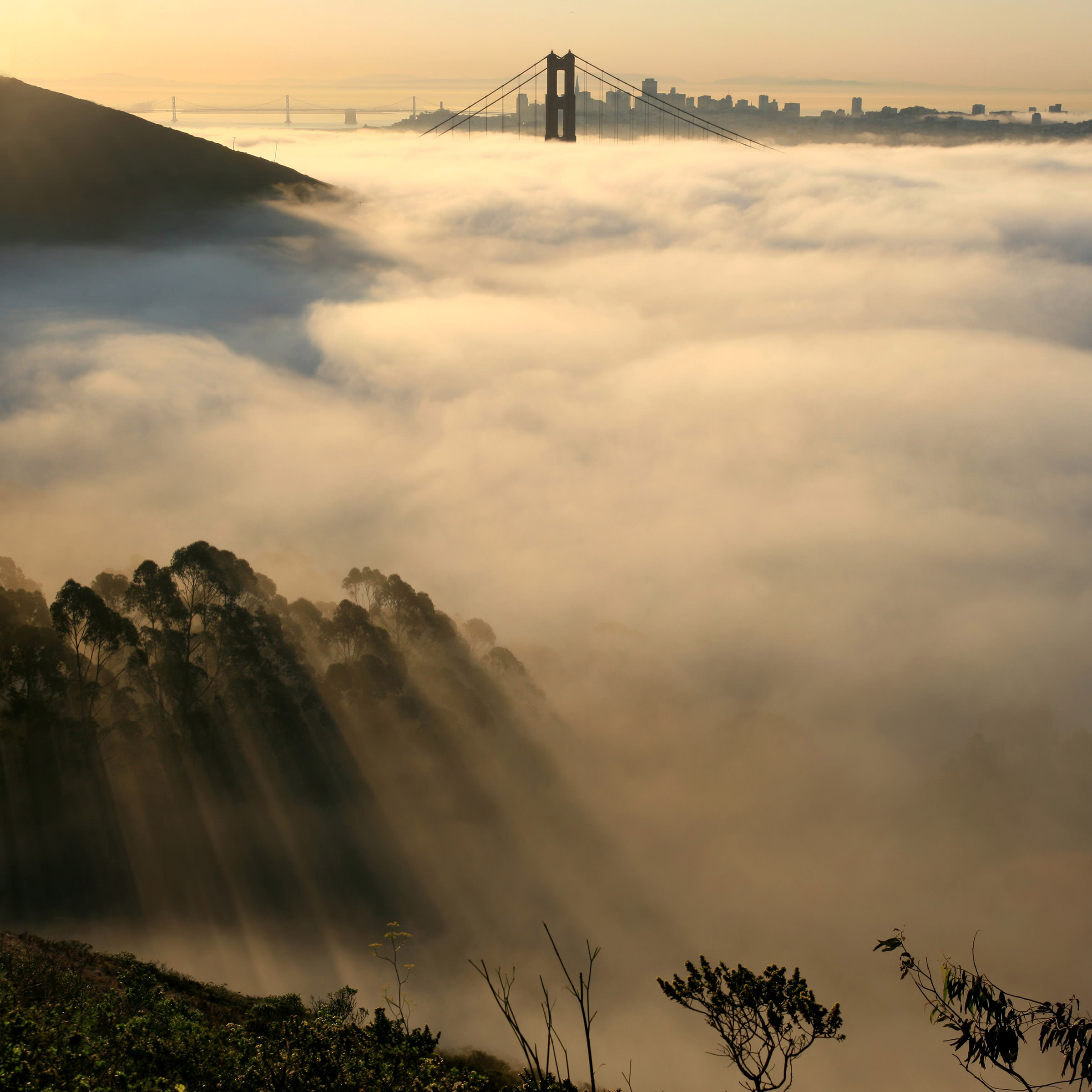 The fog breaks over the San Francisco Bay.