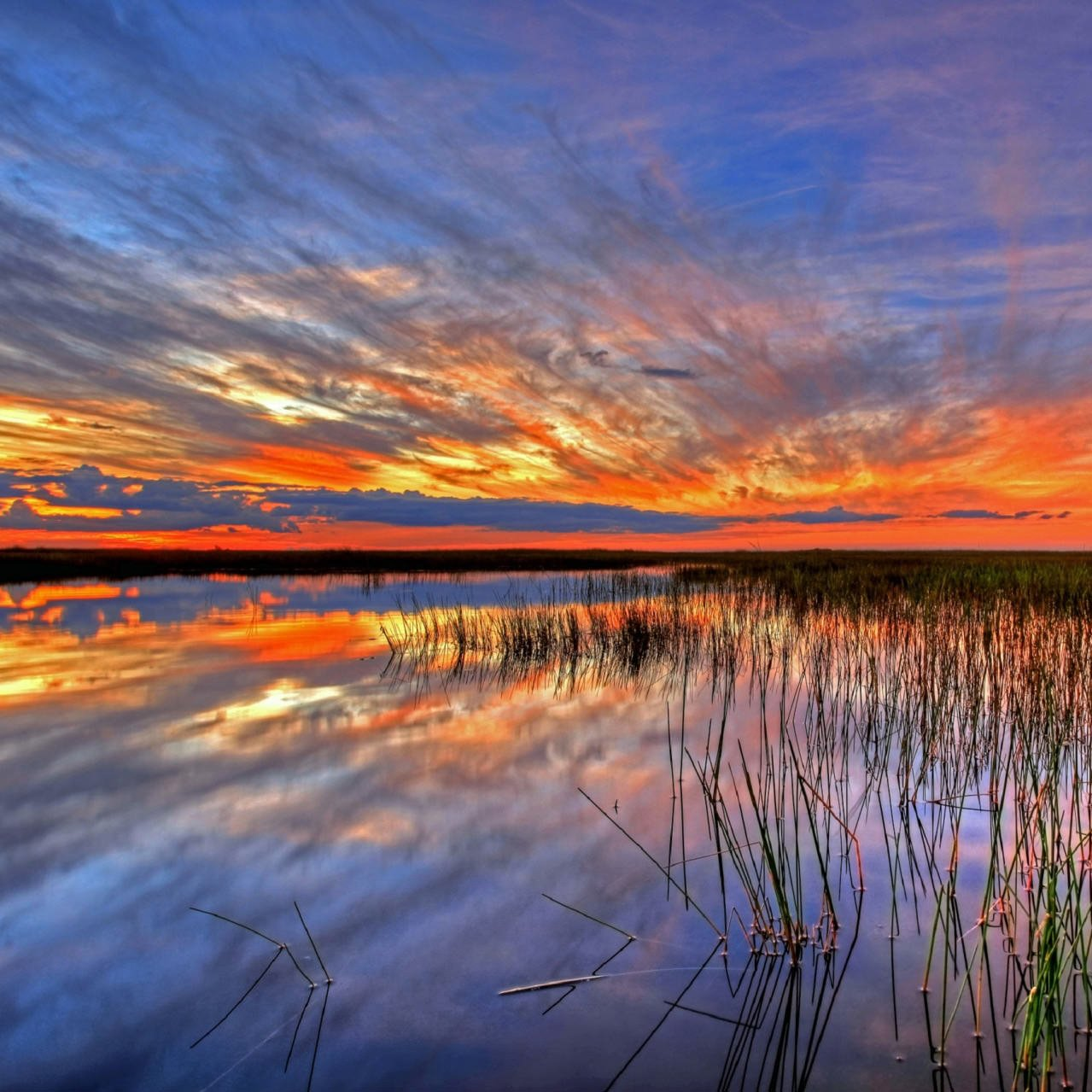 florida everglades Everglades an overview of the everglades in southern florida, us encyclopædia britannica, inc natural environment the everglades occupies a shallow limestone-floored basin that slopes imperceptibly southward at about 24 inches per mile (about 4 cm per km.