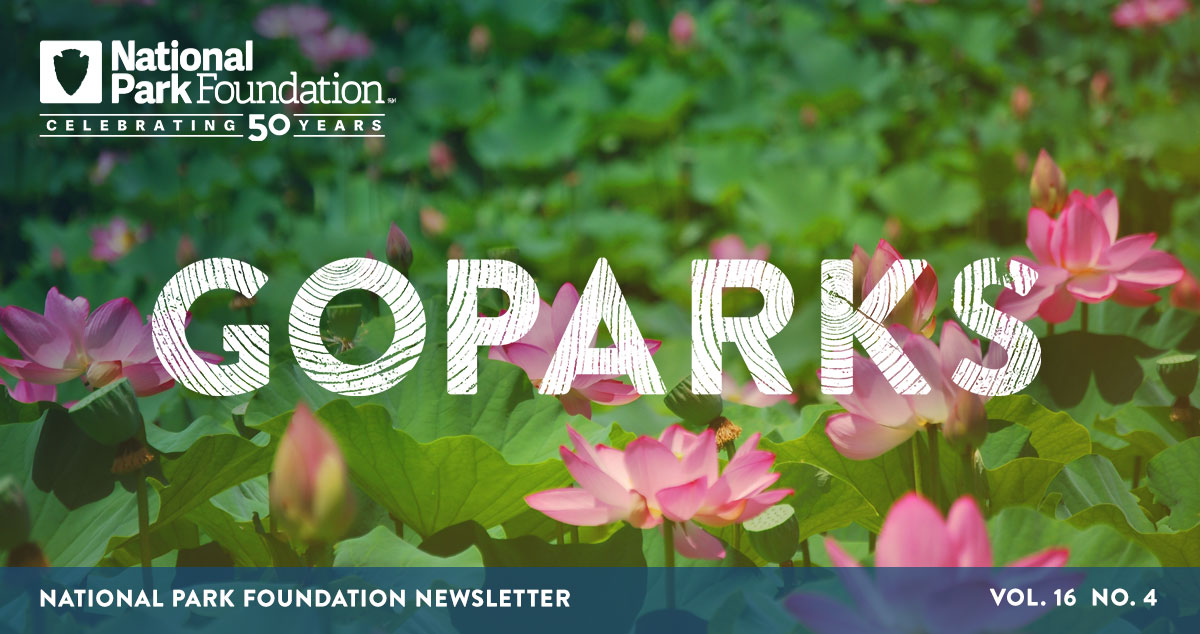 national park foundation, go parks newsletter graphic over a image of pink flowers in Kenilworth Park and Aquatic Gardens