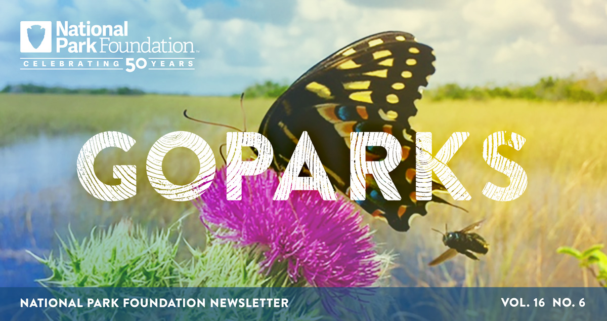 national park foundation, go parks newsletter graphic over a image of a black and yellow butterfly and bumblebee on a pink flower in Everglades National Park