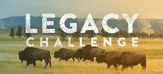 Bison walking through a field in Yellowstone National Park under the words Legacy Challenge
