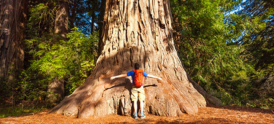 man standing with arms outstretched look up at large sequoia tree