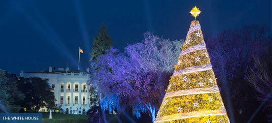 The National Christmas Tree lit up in Presidents Park during the 2017 ceremony