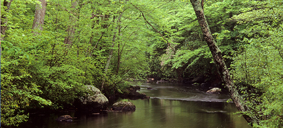 Forest lined river bend along Eightmile River