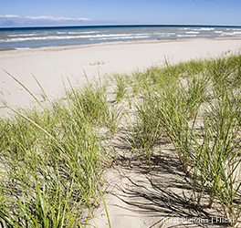 A strip of beach at Indiana Dunes with grasses growing in the sand