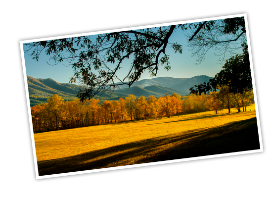 National Park Foundation, GoParks newsletter graphic cover image of Great Smoky Mountains National Park where the view of an open, yellow field is framed with tree branches hanging above, and in the distance autumn turned trees line the field and cover the rolling mountains in the background