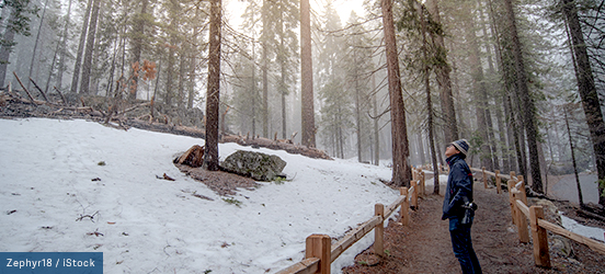 A man walking along a trail in a forest in Yosemite National Park
