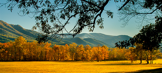The Great Smoky Mountains rise up behind a line of fall turned trees and a yellow, open field