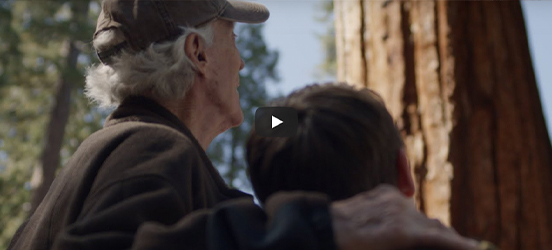 A still taken from the linked video, showing an older man with his arm around a boy, looking up at a sequoia tree
