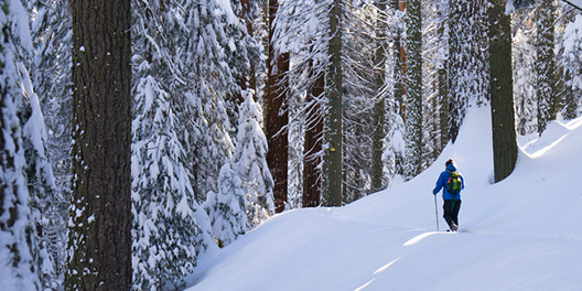 A person dressed in snow gear is walking on a trail through snowcovered Sequoias in Sequoia & Kings Canyon National Parks