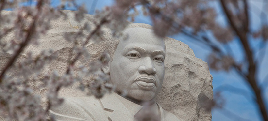 The Martin Luther King, Jr. sculpture appears to be looking through blooming cherry blossom branches at the viewer on the National Mall.