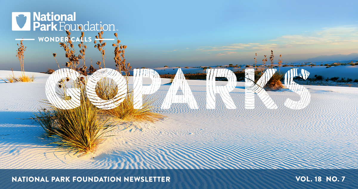 National Park Foundation, GoParks newsletter graphic cover image of a yucca plant growing in the rolling sand dunes in White Sands National Park