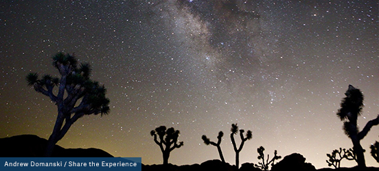 The starry night sky fills the image with just the silhouette of rocks and Joshua Trees can be seen along the bottom