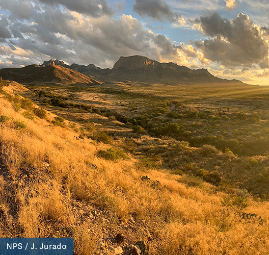 Desert brush glows golden from the setting sun, the flat ground rises into mountains in the distance at Big Bend National Park