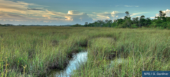 Tall grass spans as far as the eye can see with a small break revealing the swamp waters that lie below in Everglades National Park