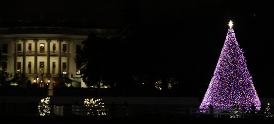 A nighttime view of the lit up National Christmas Tree with the White House illuminated in the distance