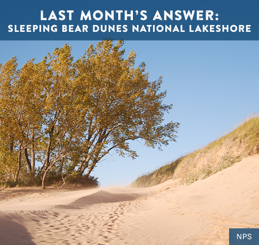 Autumn turned trees in a cluster with sand all around forming the dunes at Sleeping Bear Dunes National Lakeshore