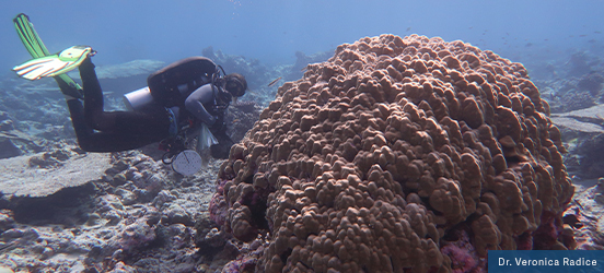 Dr. Veronica Radice scuba dives along the ocean floor, investigating the coral reef