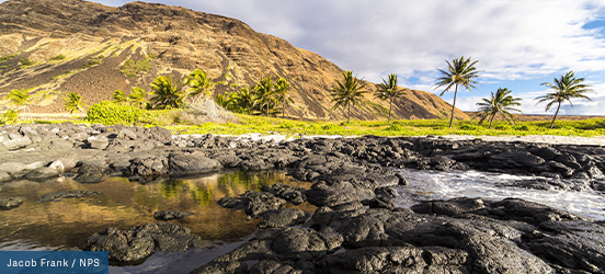 A lava rock beach edges a lush green area with palm trees dotting the base of a mountain at Hawai'i Volcanoes National Park
