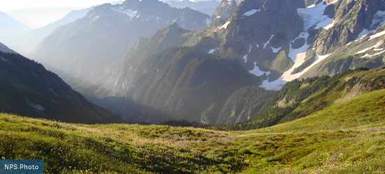A mountaintop view of North Cascades National Park with the flower dusted mountainside leads down to the tree-filled valley