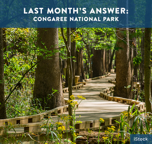A raised boardwalk winds through a forest in Congaree National Park