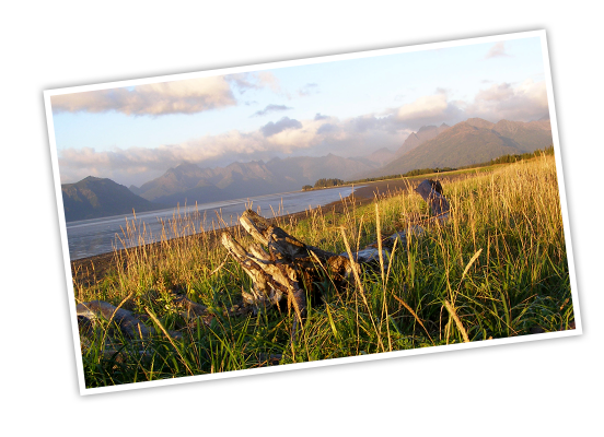 Driftwood sits camouflaged in tall grasses along the shore of Lake Clark National Park and Preserve with hazy mountains lining the horizon