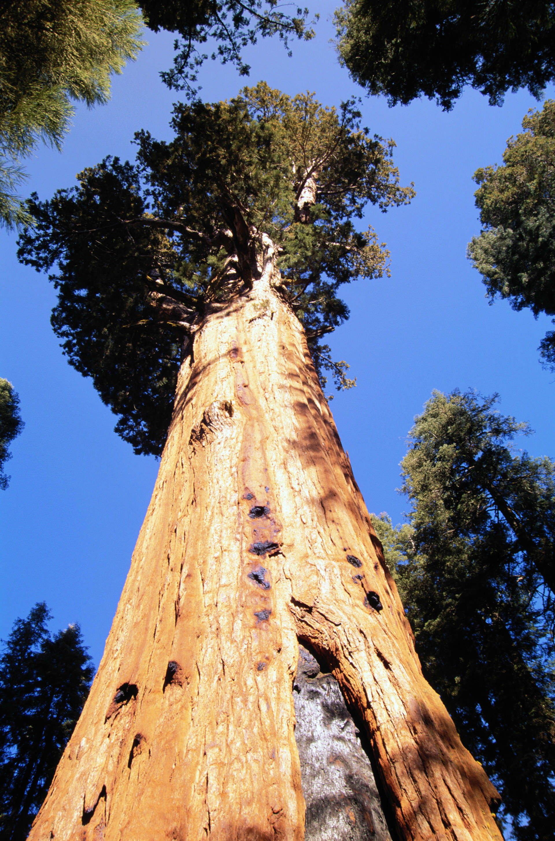 Sequoia And Kings Canyon National Park Foundation