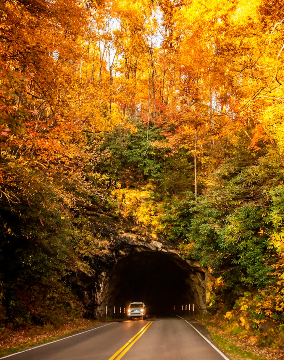 A tunnel through the Blue Ridge Parkway