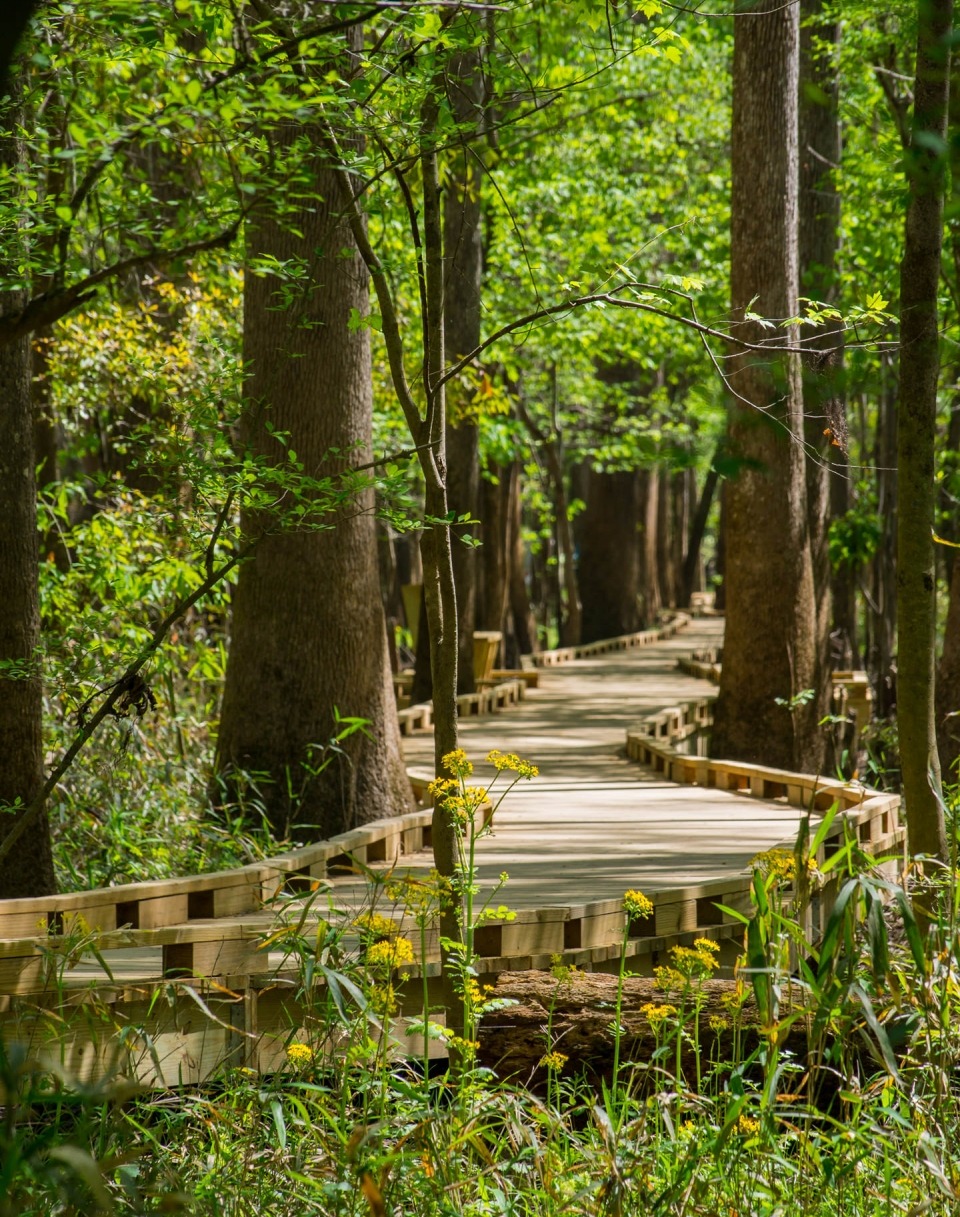 Boardwalk through forest of Congaree National Park