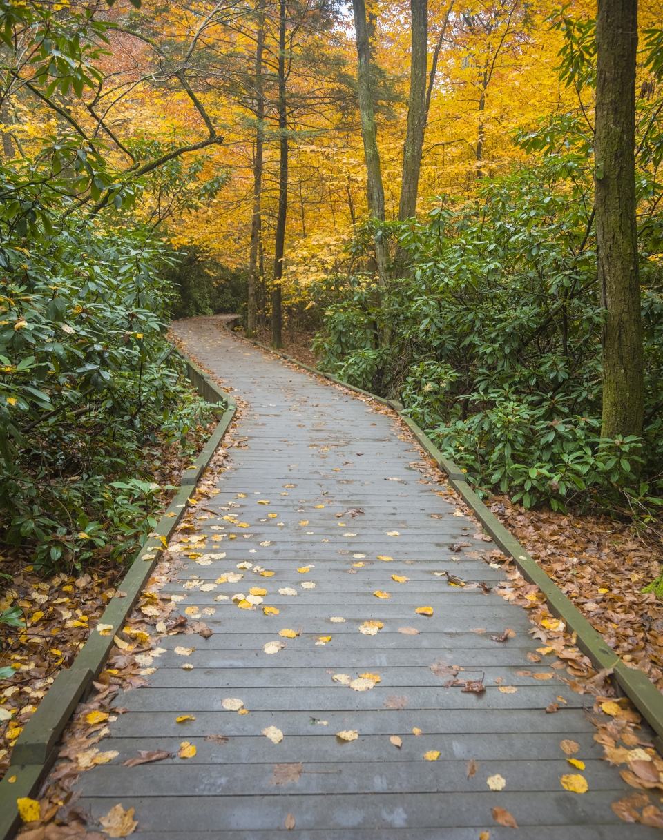 An autumn path at Delaware Gap National Recreation Area.