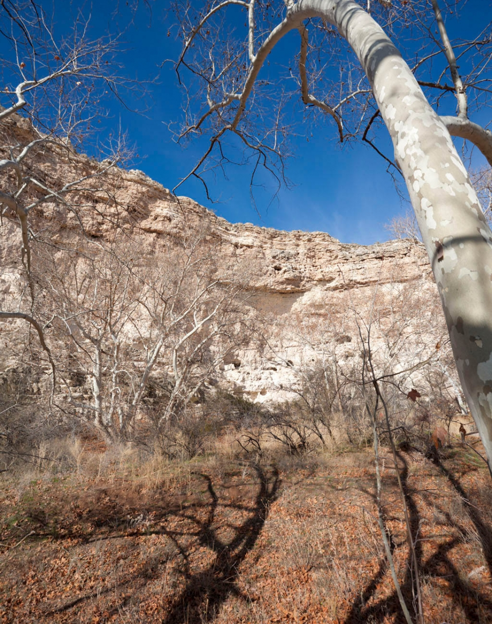 Sycamore trees and cliffs in Montezuma Castle National Monument