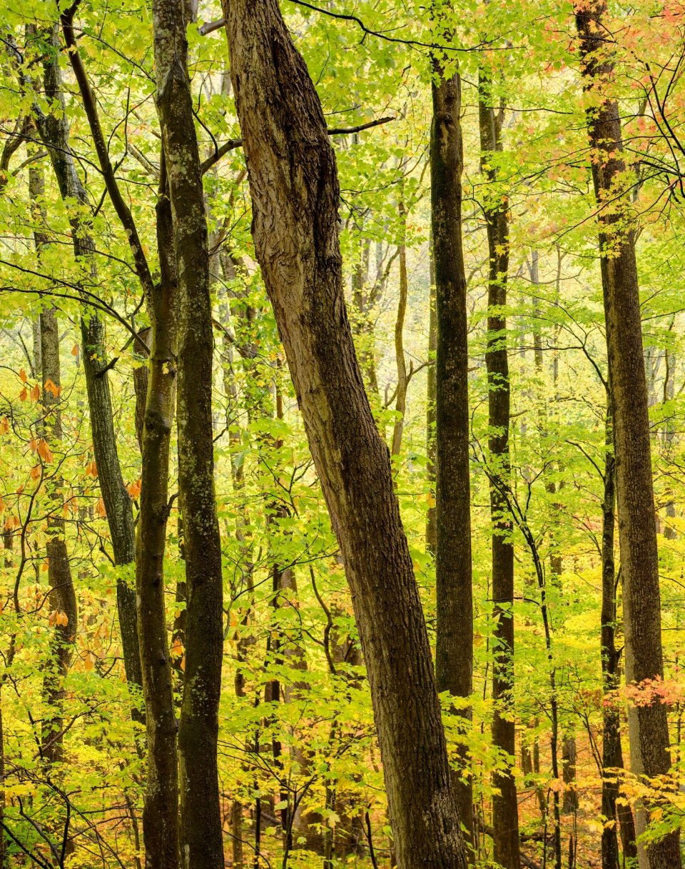 The trees come alive at Great Smoky National Park