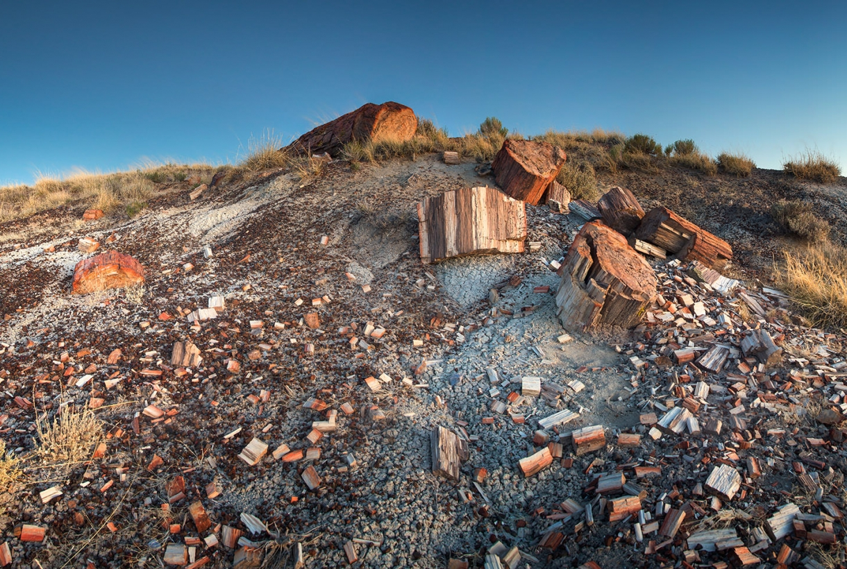 Image of Petrified Forest National Park at Sundown