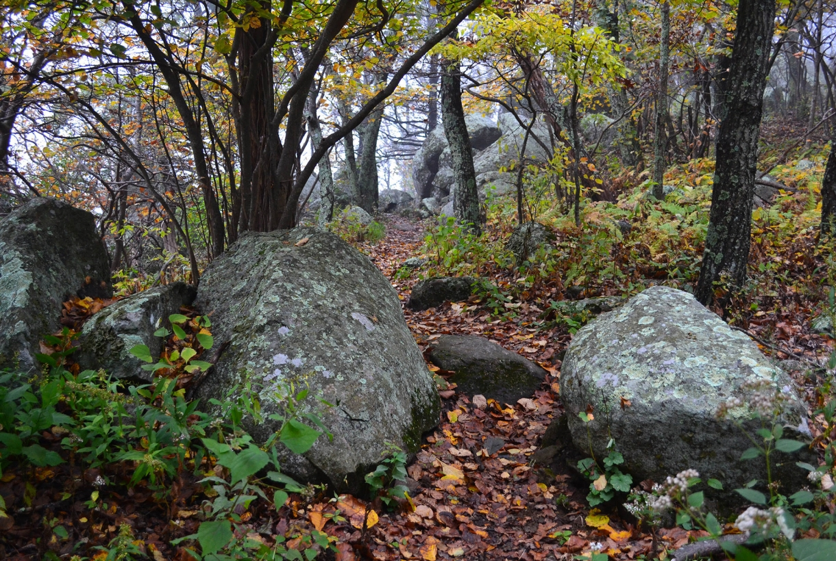 Fallen leaves cover the rock-lined trail