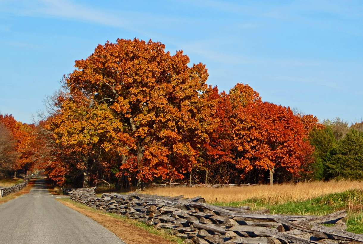Image of red autumn trees at Pea Ridge National Military Park