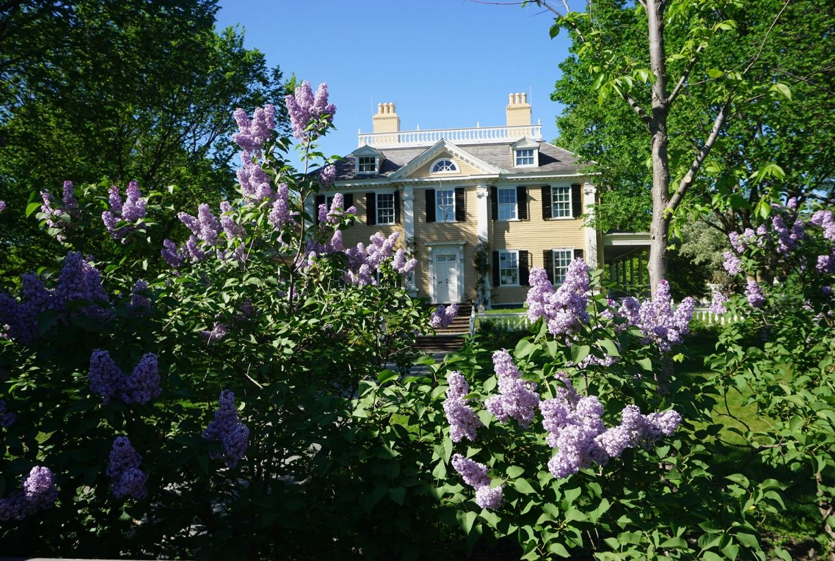 Beautiful flowers at the Longfellow House