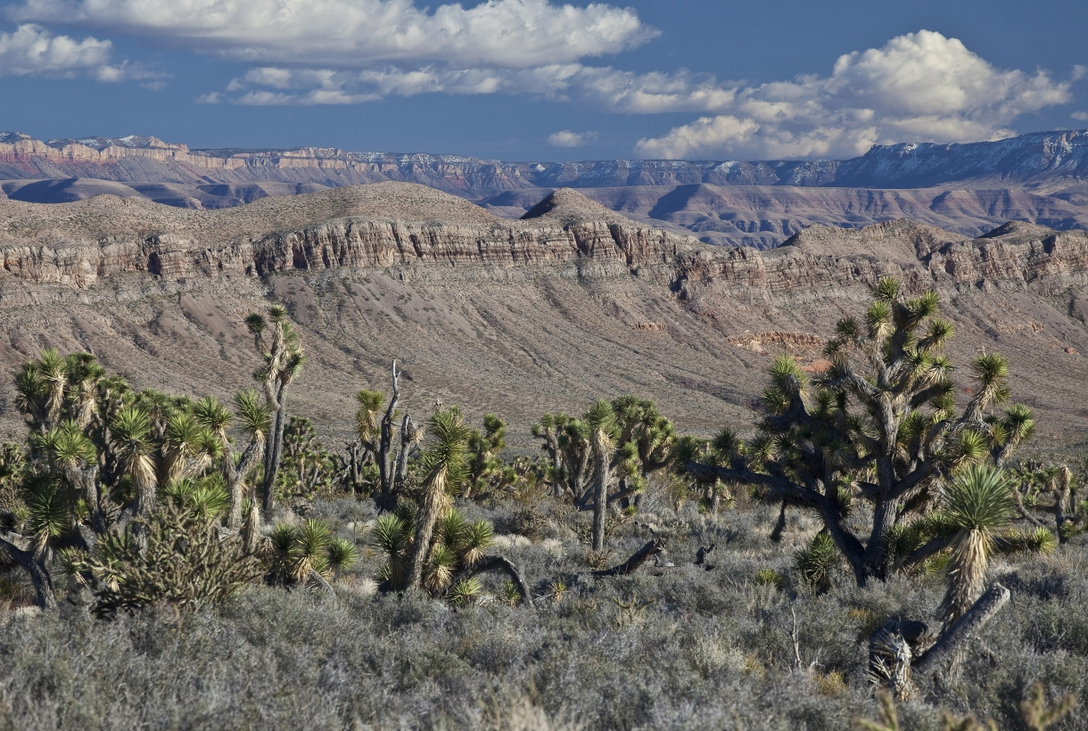A Colorado Plateau at the Grand Canyon-Parashant National Monument