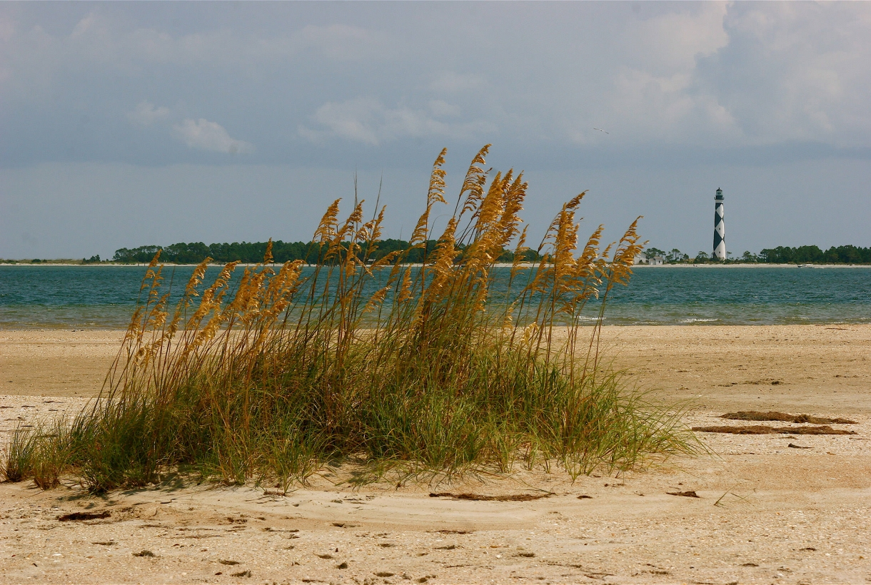 Sea oats near water and the Cape Lookout lighthouse