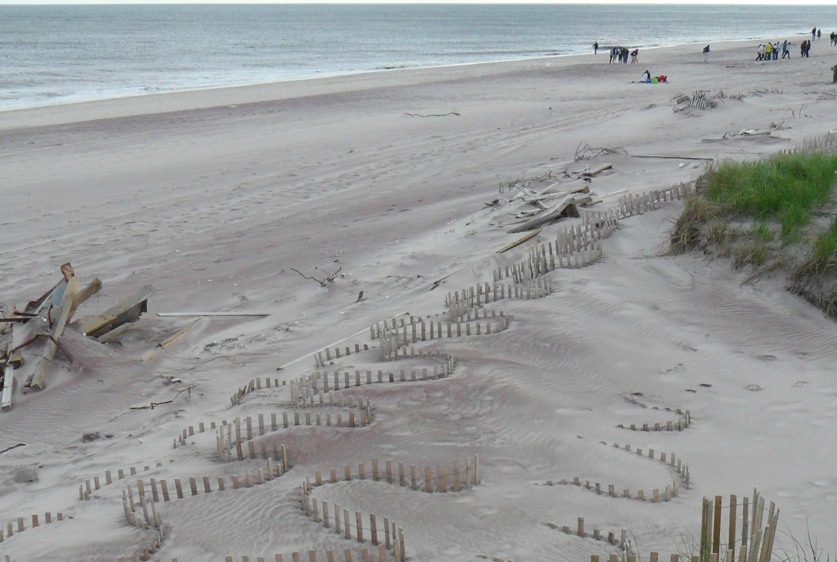 The dunes of cherry grove beach at fire island national seashore