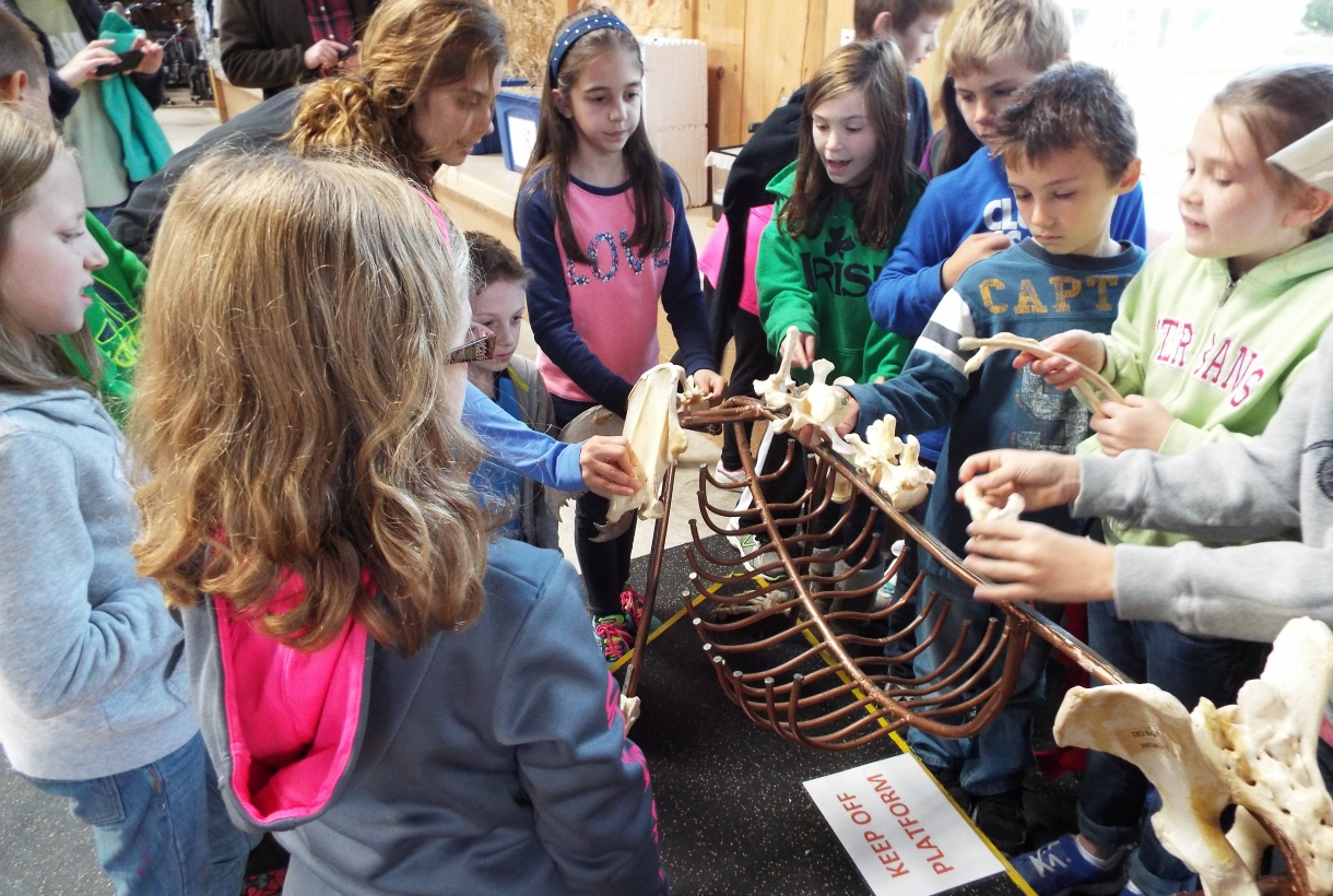 Students examine a skeleton at Delaware Water Gap's environmental center