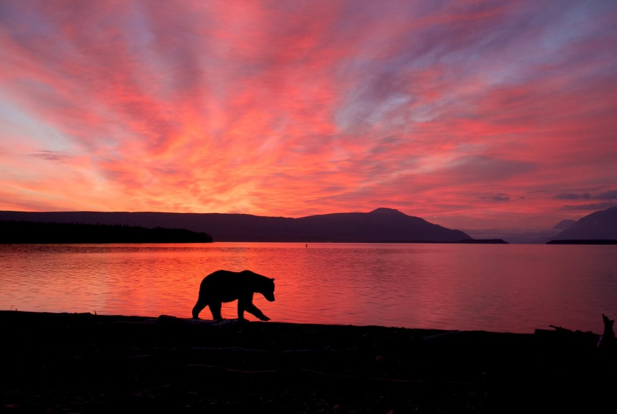 Silhouette of bear against red sunset
