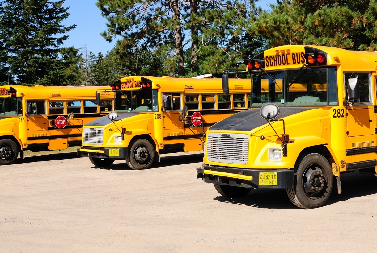 Three school buses parked in a wooded area