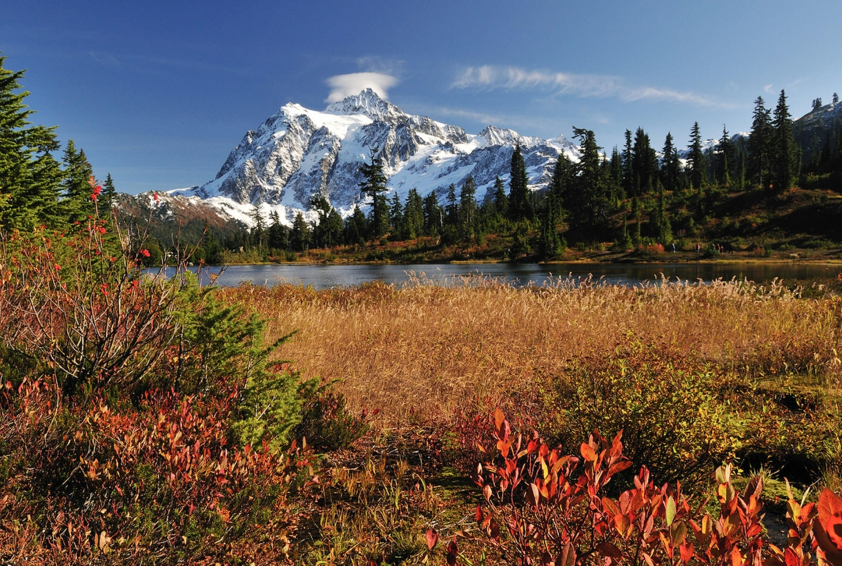 North Cascades Mountains with flower fields