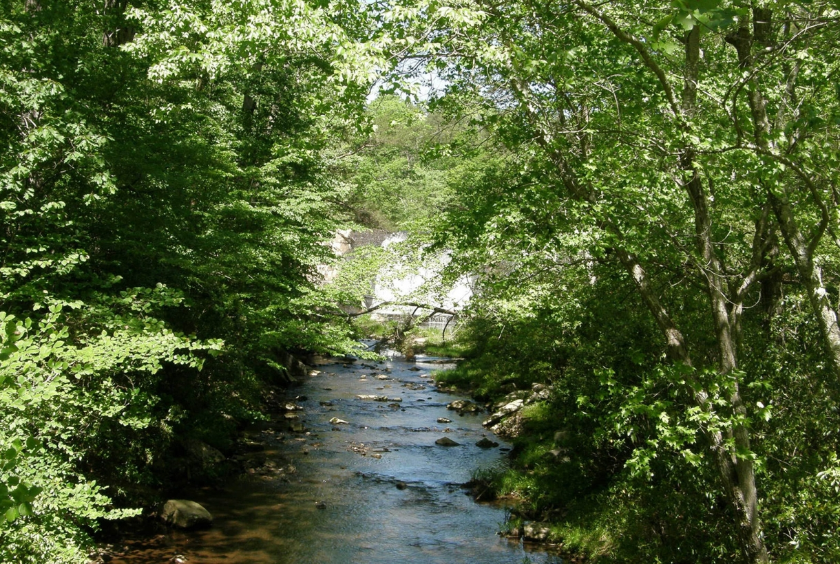 Creek runs through the middle of a forest