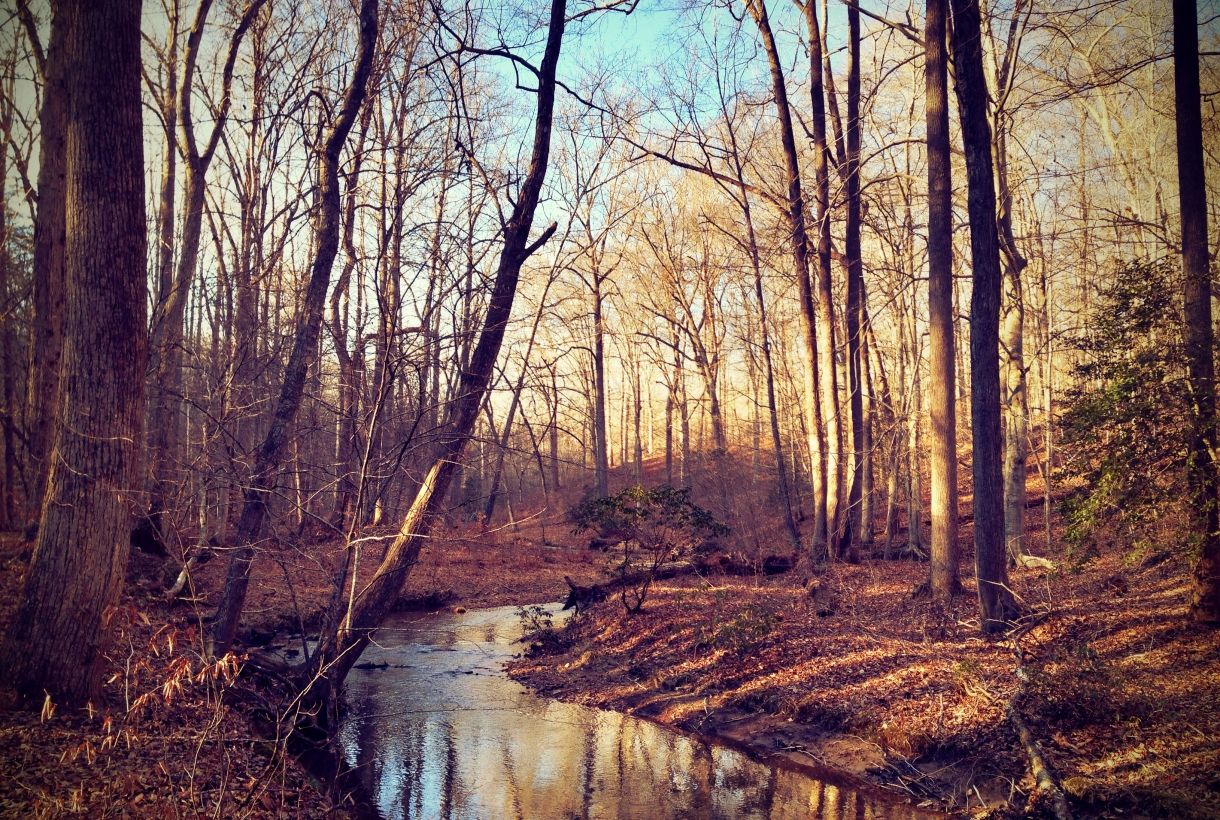 A Creek in Prince William Forest Park in January
