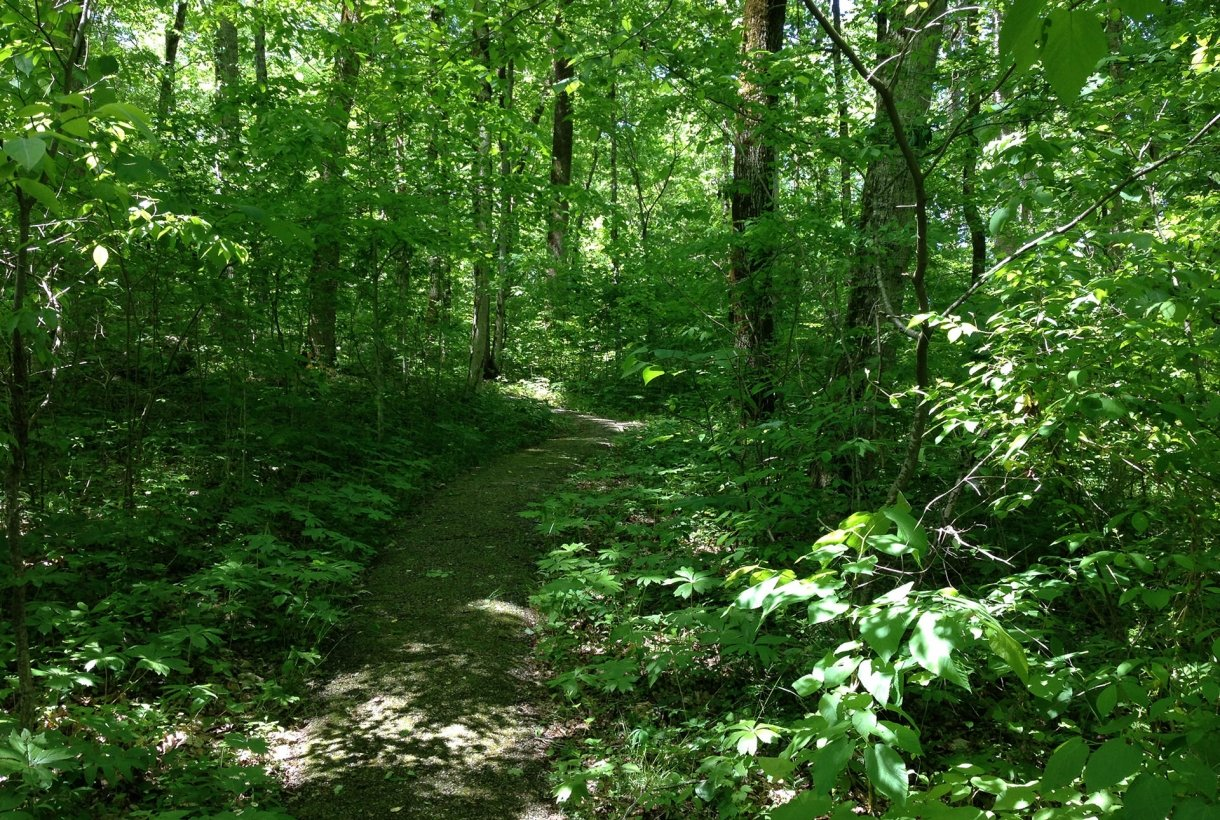 trail cuts through dense woods