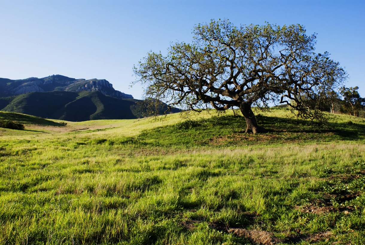 tree on hill with large hills in background