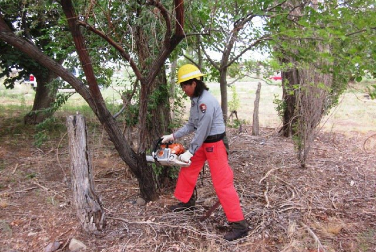Biological science aid doing invasive plant control