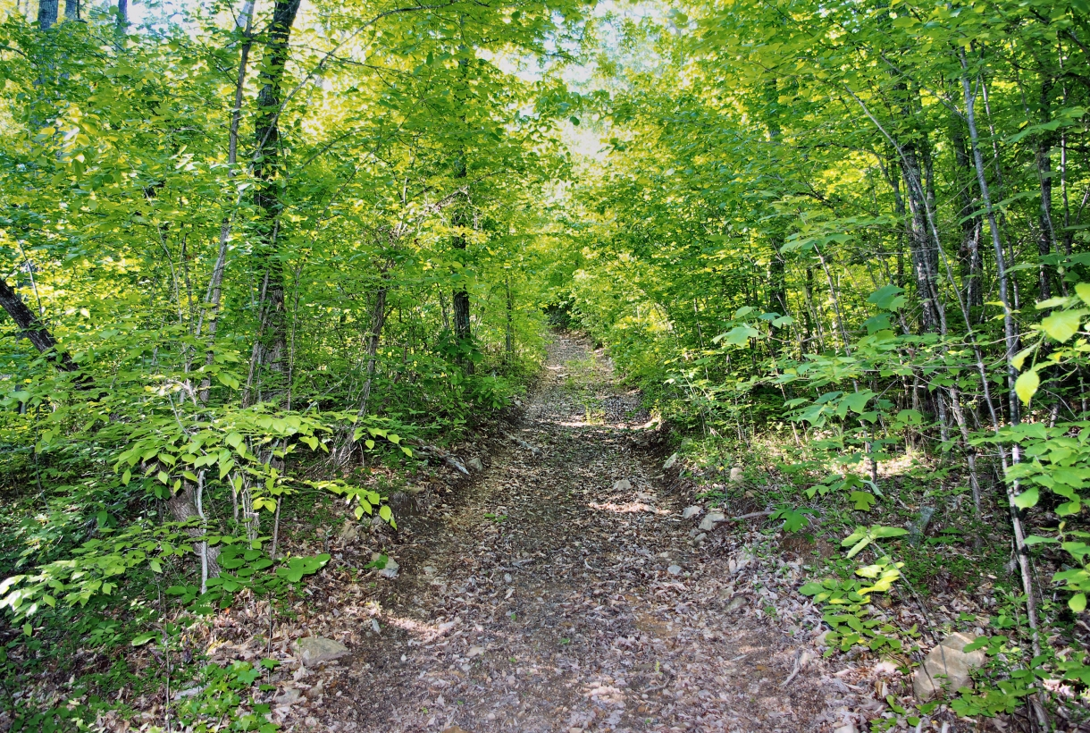 Trail going into the woods