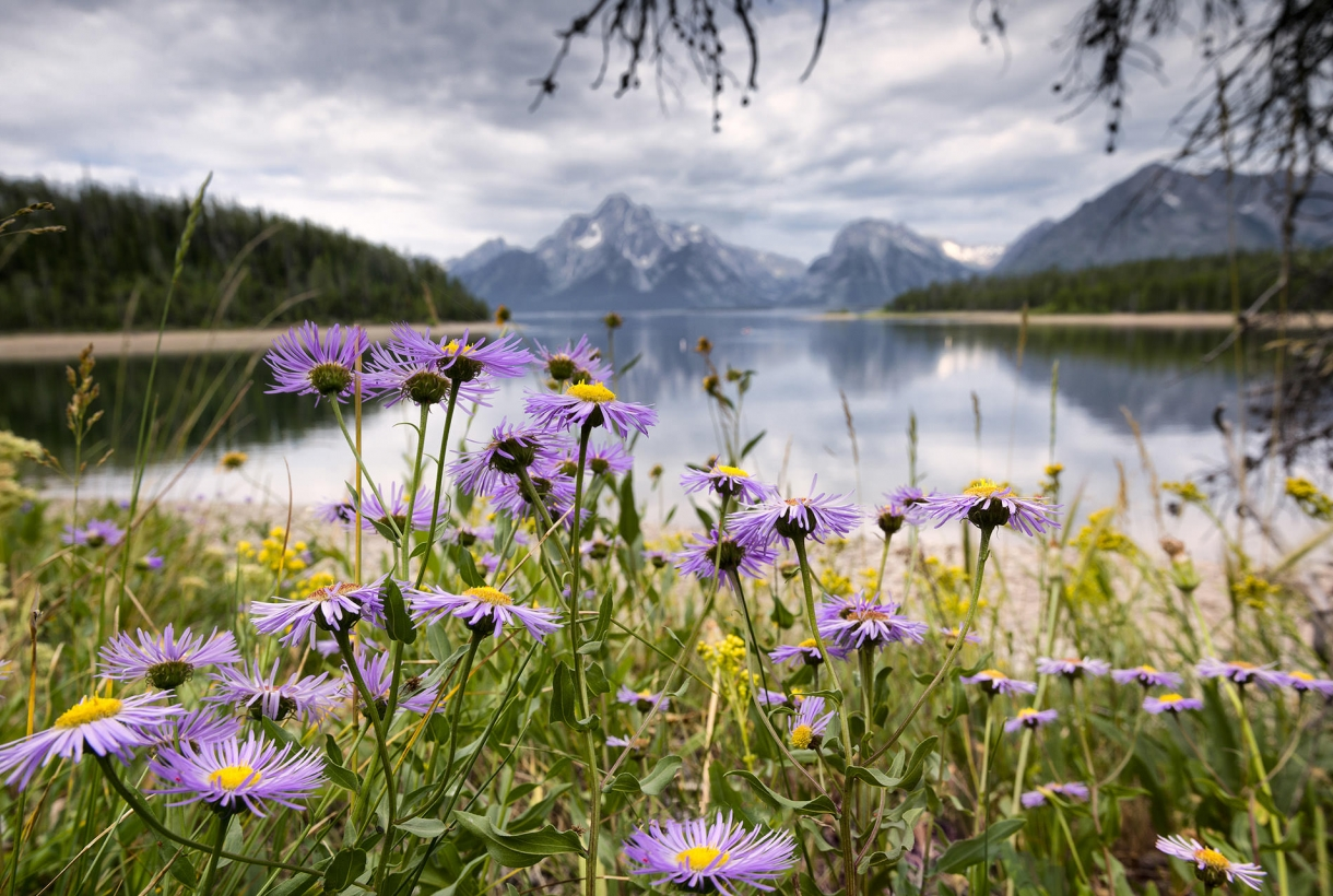Grand Tetons flowers